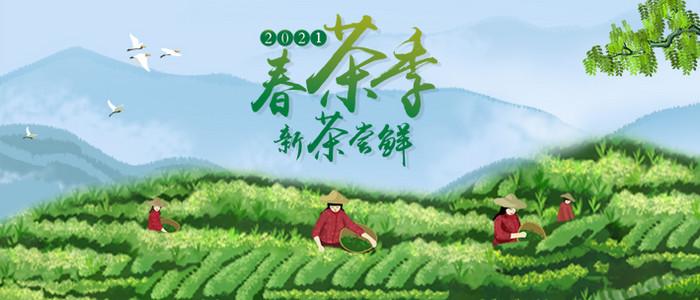 2021年春茶预售开启 限时福利价发售