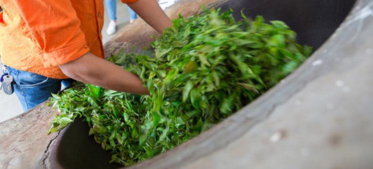 """一个关于制茶十年的""""新工匠""""的故事"""