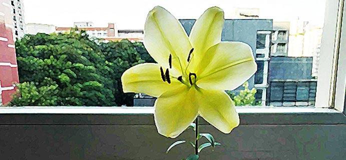 沾花惹草 | 人在草木之间•百合  想起故乡锦里的百合花,长在悬崖,沃土~