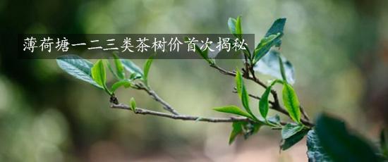 2.薄荷塘一二三类茶树价首次揭秘