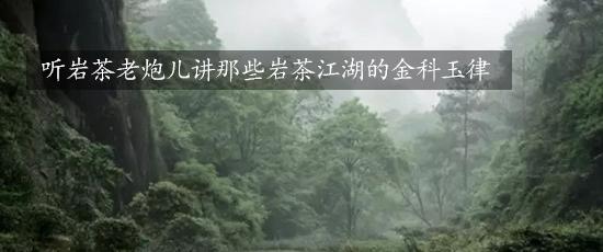 听岩茶老炮儿讲那些岩茶江湖的金科玉律