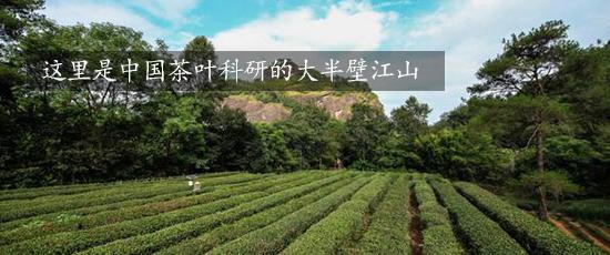 这里是中国茶叶科研的大半壁江山