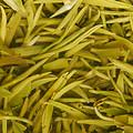 叶底叶片颜色为嫩绿明亮,芽叶细嫩幼小,以一芽一叶初展为主,符合特级雨花茶的标准,嫩匀成朵,芽叶较肥,较匀整,非常柔软。