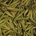 叶底柔软,细嫩,全部为整齐芽叶,叶色偏浅嫩黄色。