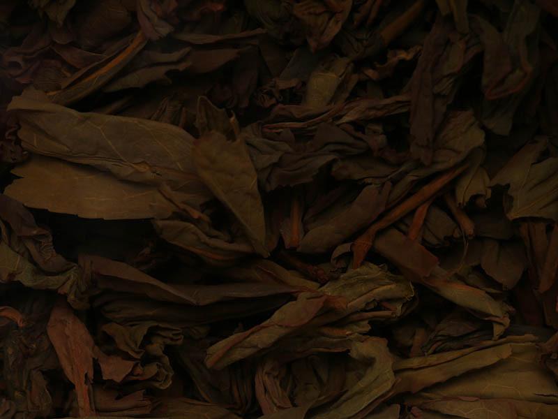 """色泽青黄褐相间,红边明显,肥厚柔然有弹性,触感柔滑,""""蛤蟆背""""明显,叶底显清甜粽叶香。"""