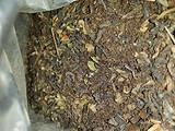 请教尼泊尔茶