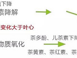 """一张图看清:乌龙茶""""绿叶红镶边""""是怎么回事?"""
