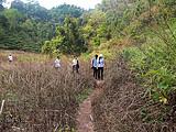 翻山越岭5个小时,穿过山谷趟过河流,却只能看到几十棵茶树