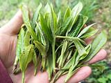 【同样是荒野茶-它却美的如此让人着迷】