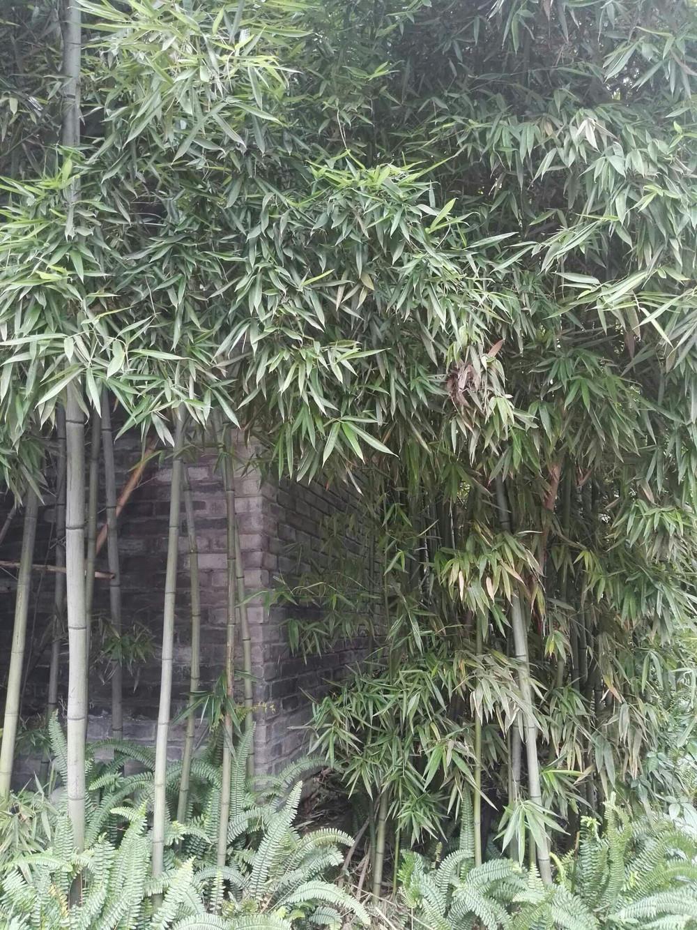 人在草木之间·斑竹