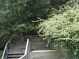 人在草木之间·皂角树