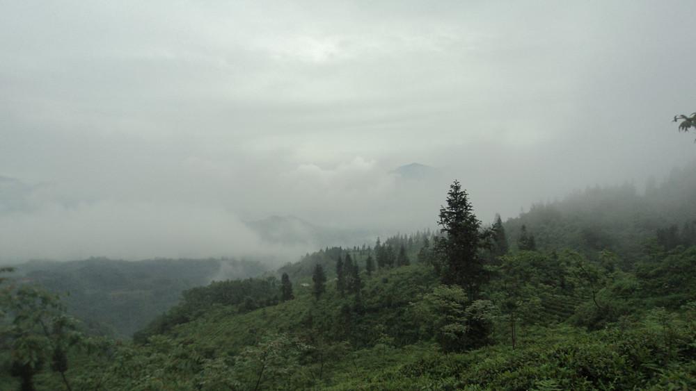 """为什么人们常说""""高山云雾出好茶""""?"""