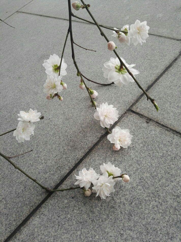 【竹里舍·锦言】    一路繁花相迎送