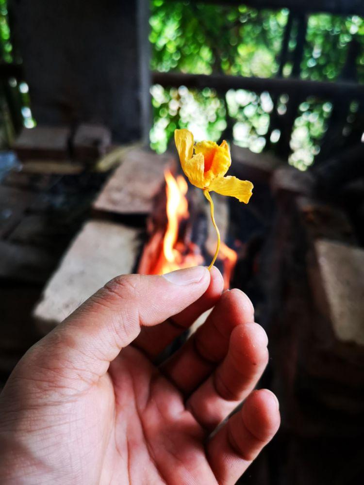 石斛花与竹筒茶