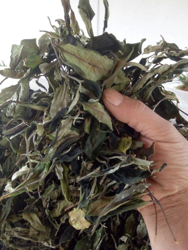 荒茶单株,古树白茶
