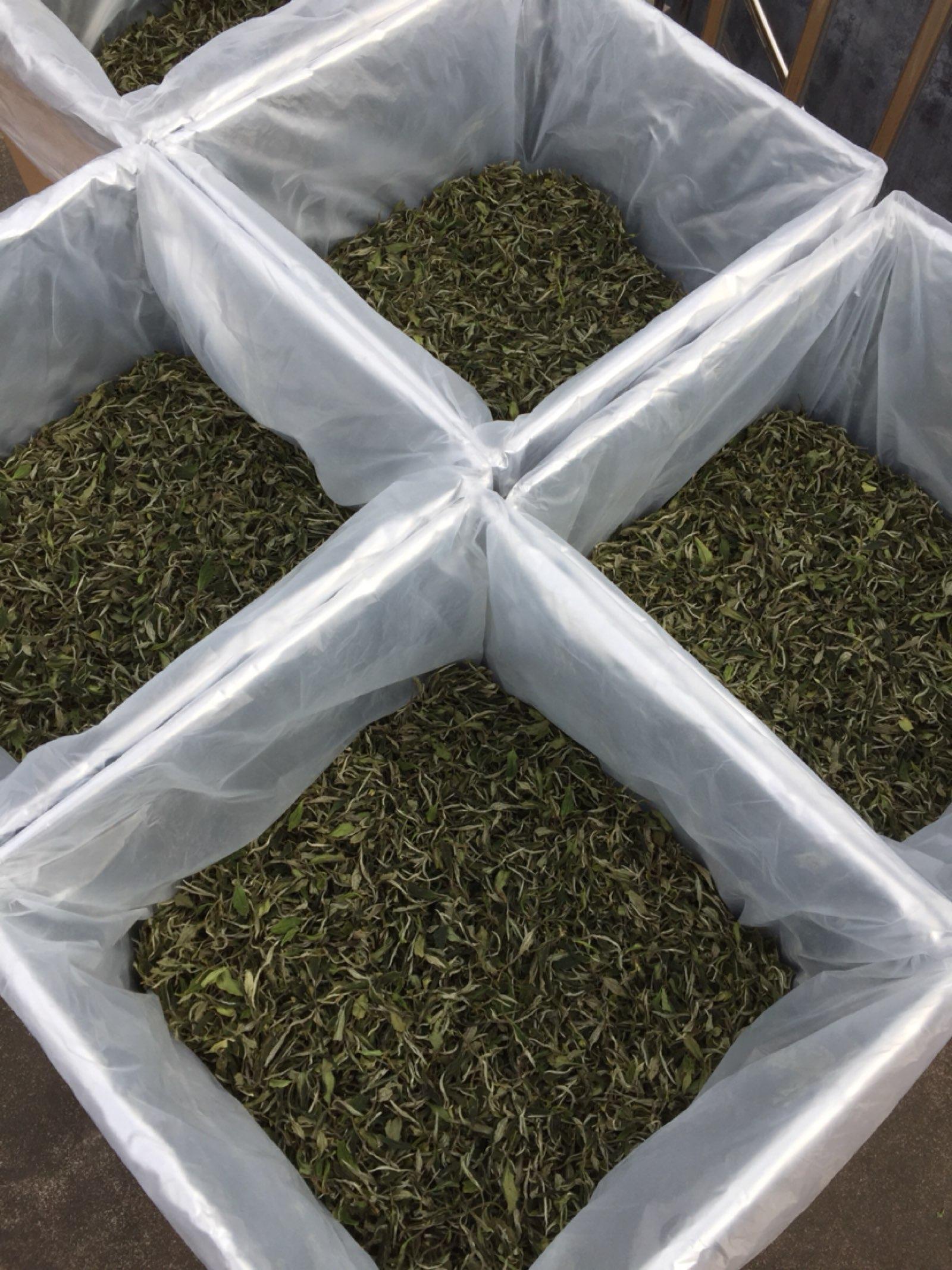 福鼎白牡丹,纯日嗮清明前白茶。