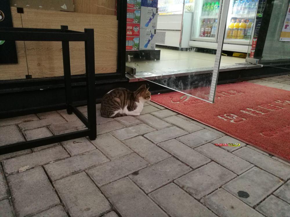 渣猫第二弹:挑食症患者