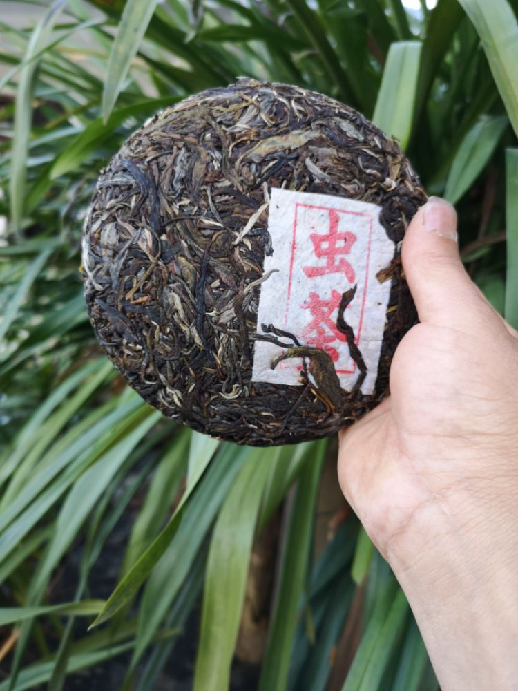 东方美人茶之 ——生普