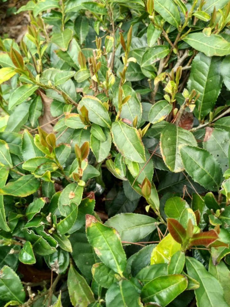 紫茶,春夏秋冬。