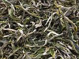 2019年头波绿茶