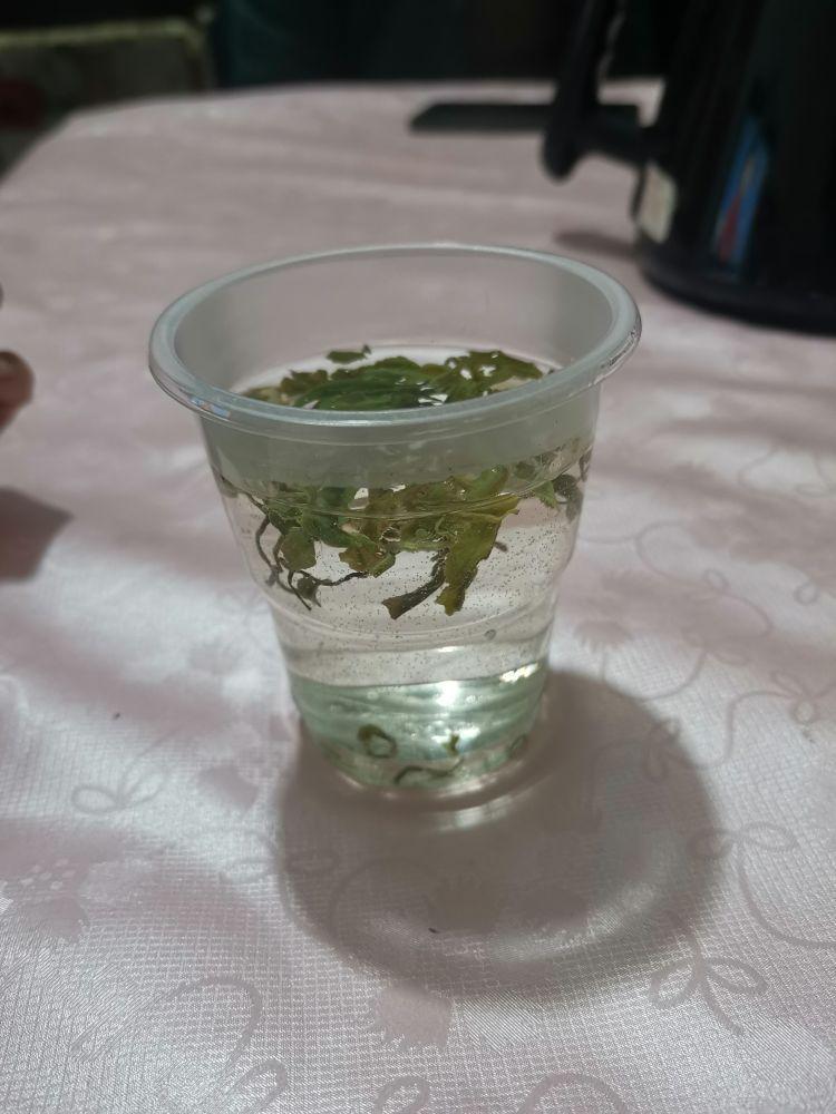 请问是什么茶叶
