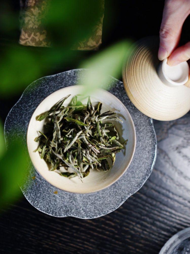 福鼎白茶丨如何辨识新白茶?新茶是老茶的基础!